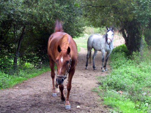 cavalos_g